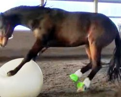 """Horse Who Loves To Play Fetch """"Loses His Mind"""" When Mom Gives Him A Giant Ball"""