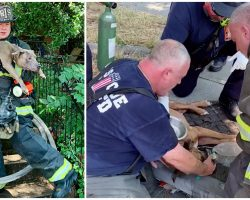Firemen Save 5 Dogs From Burning Home, Spot 1 More Lying Unconscious Under Table