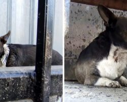 Homeless Dog Constantly Attacked By Big Dogs Cowered In Fear As He Saw No Escape