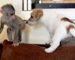 Baby Monkey Chased Away By Her Own Mother, Finds Solace In A Puppy's Friendship