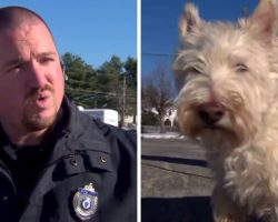 Tiny Dog Runs Up To Cop And Starts Barking Loudly, Begs The Cop To Follow Him