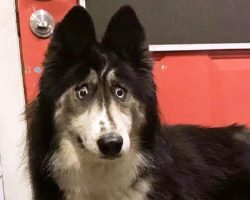 """Dog Gets Dumped For Being """"Funny-Looking"""", Wonders If Anyone Will Accept Her"""