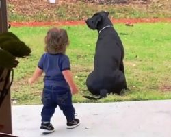Lonely Dog Was Sitting All Alone In The Yard But Baby Brother Just Made Her Day