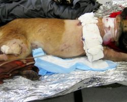 Soldier Wants To Adopt Dog Who Took 4 Bullets For Him, But People Mock Him For It