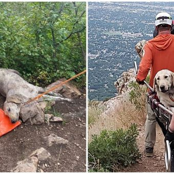 120-Lb Lab Hikes To Mountaintop In 110-Degree Heat, Then Collapses & Can't Move