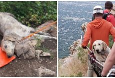 Hiker Climbs Mount Olympus With 120-Pound Dog On Scorching Day, Dog Collapses