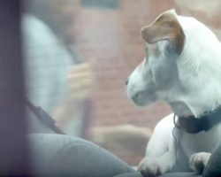 Dogs Cry Out For Help While Locked In Vehicle On Hot Day