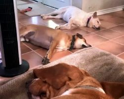 """Sleeping Dogs Get Shaken To Their Core When Dad Says The """"Unspeakable"""" Word"""