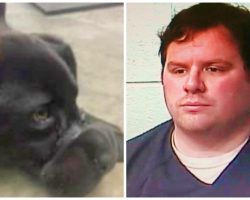 Former County Jail Employee Tapes Puppy's Legs & Snout Shut, Dumps Him In Woods