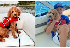 Dog Wearing Lifejacket Falls Off Boat & Goes Missing In Treacherous Waters