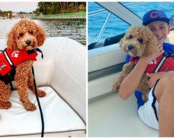 Dog Wearing Lifejacket Falls Off Boat & Goes Missing In Treacherous Waters