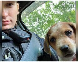 Police Officer Adopts Abandoned Injured Puppy One Month After Saving Her Life