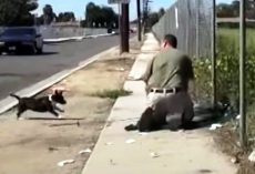 Stray Mama Dog Freaks Out When She Sees A Man Trapping Her Only Puppy In A Net