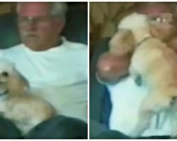 Angelic Pooch Becomes Devil Dog When Owner Says He Might Have Fleas