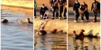 Heroic Police Officer Dives Into Canal And Saves Dog From Drowning