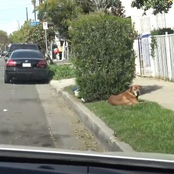 His Family Moved Away And Left The Old Dog Behind To Fend For Himself