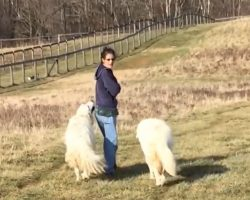 Woman Starts Walking Her Dogs When The Chickens, Ducks, And Goats Tag Along