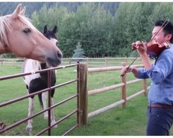 """Man Playing Violin Is Joined By 2 Horses Who """"Dance"""" To His Musical Serenade"""