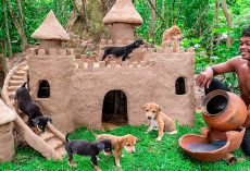 Thailand Man Rescues Abandoned Puppies & Builds Castles For Them To Live In