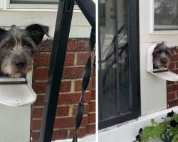 Clever Dog Uses The Mailbox To Greet People In The Neighborhood