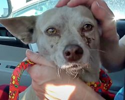 Owners Dump Dog In Lumber Yard And Toss All Of Her Belongings In Trash Bin