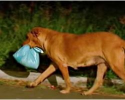 Woman Took-In Street Dog That Escaped Every Night, Eventually Followed Him