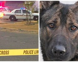 Murder Suspect Kills Heroic Police K9 During Daytime Shootout With Cops