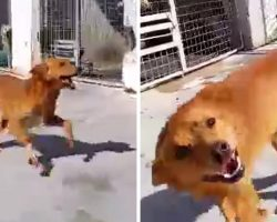"""""""Unwanted"""" Dog Locked Up In Shelter For 9 Years, Announces His Adoption To World"""