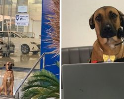 Stray Dog Keeps Coming Back To Car Dealership Until They Give Him A Job