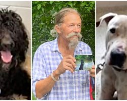 Vet Pleads For Dogs Back After They Went Missing & Got Adopted By Another Family