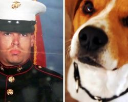 "Veteran With PTSD Points Gun At ""Shadows"", But A Dog Looks Him Deep In His Eyes"