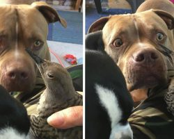 Worried Dog Brings Injured Bird To Mom, Waits To See If It's Okay
