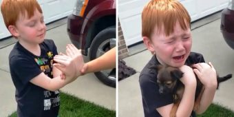 Boy Was Saving Up To Buy Puppy, Grandma Asks Him To Close His Eyes & Stretch His Arms