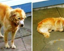 Owner Chains Dog In Hot Sun, When The Dog Cried He Got Beat Up & His Mouth Taped