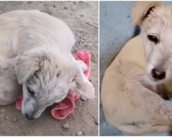 Brain-Damaged Pup Curled Up To Hide, Tries To Lift Head & Thank Woman But Can't