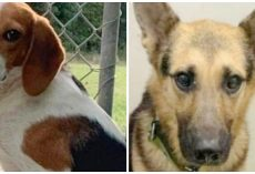 Two Juveniles Break Into Animal Sanctuary Twice & Steal Four Scared Dogs