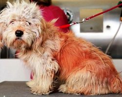 Dog Had 1 Week Left At High-Kill Shelter, But A Grooming Session Saved His Life