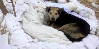 Dogs In Stray's Pack Die Away One By One, The Last One Left Becomes All Alone