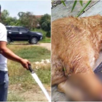 Mischievous Puppy Chewed Neighbor's Shoes So He Grabs Sword To Pay Him A Lesson