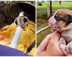 Mama Dog & Litter Of Newborns Heard Crying From Deep Inside 20-Foot Drain