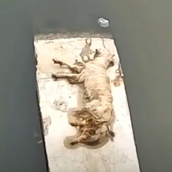 Man Finds Dog All Alone And Unable To Move At The Bottom Of River Canal