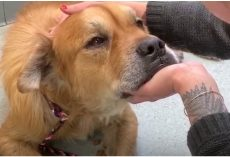 Old Dog In City Shelter Puts Paw On Woman, Tells Her It's Time To Let Him Go