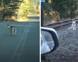 Man Stops His Car When He Spots A Husky All Alone On The Train Tracks