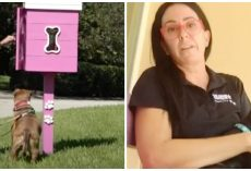"Neighbor Flips Out Over Woman's ""Ugly Pink Box"" Of Free Goodies For Local Dogs"