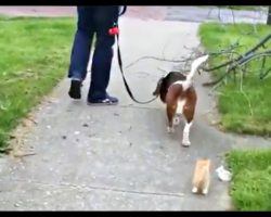 Man's Walking His Dog When A Tiny Kitten Decides To Follow Them Home
