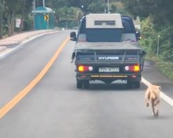 Mother Dog Chases The Truck That Took Her Pups For Miles