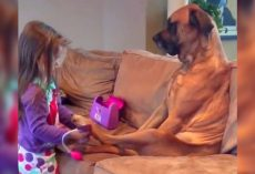 "Patient Dog Watches As Little Girl Gives Him A Thorough ""Medical Examination"""