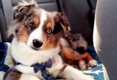Puppy Was Sleeping Through Every Song, But Then Mom Put On His Favorite Song