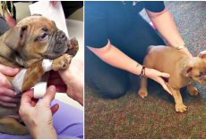 Breeder Puts Paralyzed Puppy In Box Since He's Worthless & Woman Tests His Will
