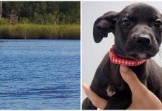 Kind Gentleman Swims Across River To Save Pup Who Was Callously Thrown Off Bridge